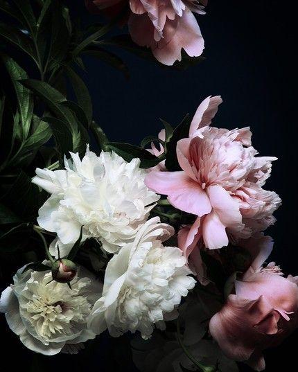 Soft Pink + Ivory + Black   Palate