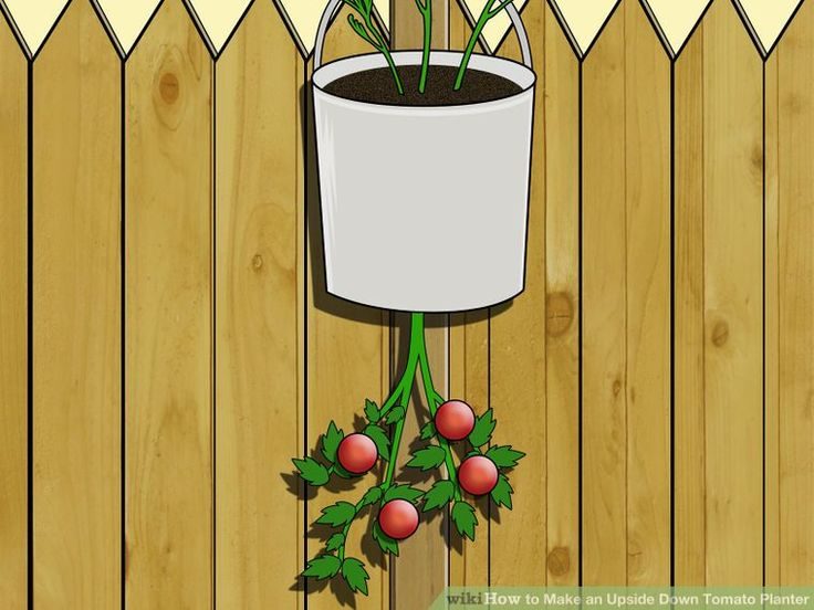How to Make an Upside Down Tomato Planter: 8 Steps (with Pictures)