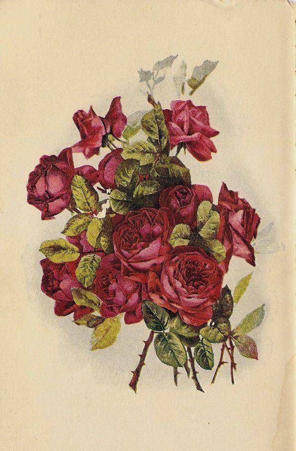 Rose leaves 2 by jinifur on DeviantArt