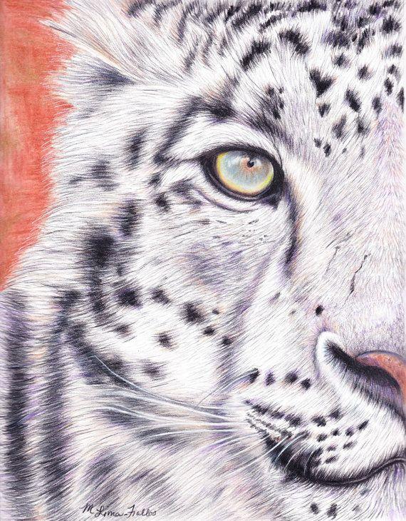 Leopard Pencil Drawings stealthy snow leopard ...