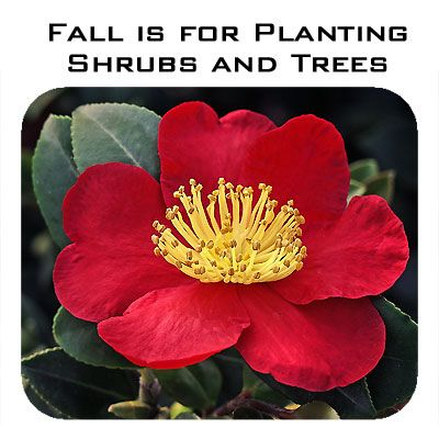 Fall Is For Planting Shrubs and Trees