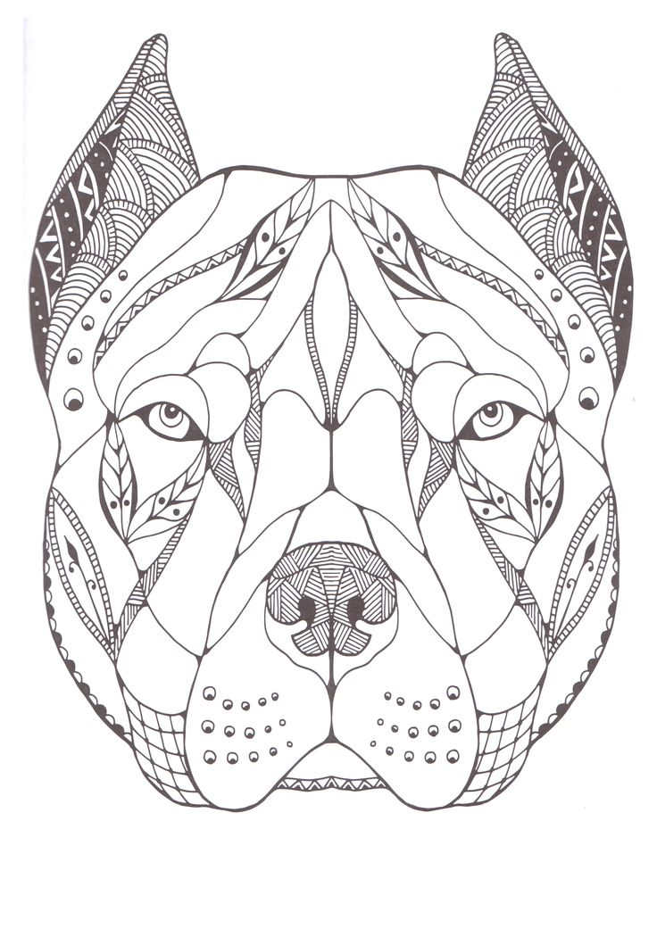 pitbull tribal tattoo coloring pages. Black Bedroom Furniture Sets. Home Design Ideas