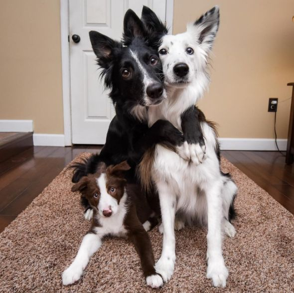 Famous 'Hugging Dogs' Are So Excited About Their New Puppy Brother