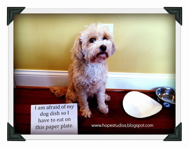 """I am afraid of my dog dish... so I have to eat off this paper plate."" ~ Dog Shaming shame - Hope Studios"