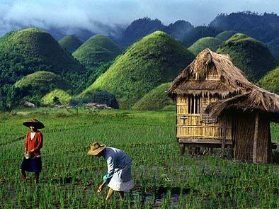 Chocolate Hills. Bohol. Philippines