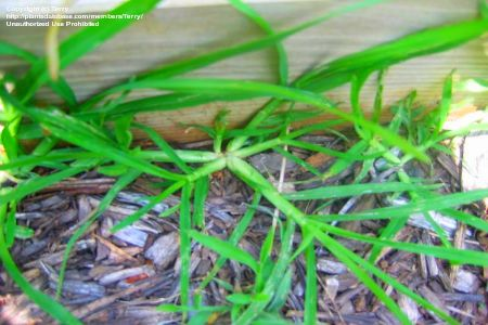 eliminator weed and grass killer instructions