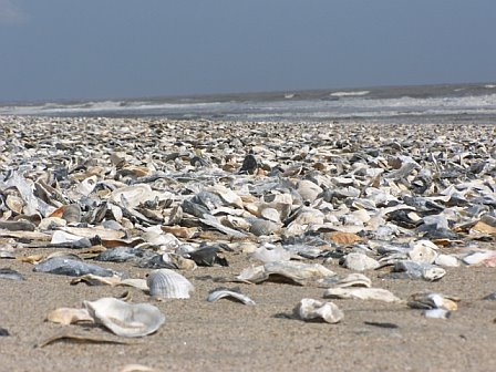 Shell Island Edisto Beach