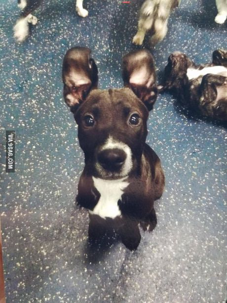 Ears for days...