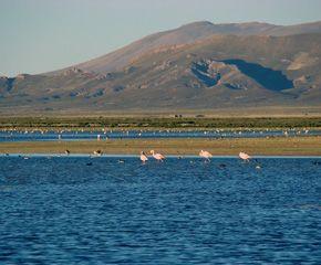 Informacion turistica sobre el Monumento Natural Laguna de los Pozuelos en la provincia de Jujuy. Hacé click y descubrilo !