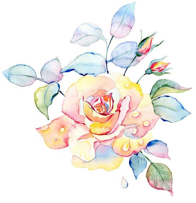 Watercolor roses seamless pattern on Behance