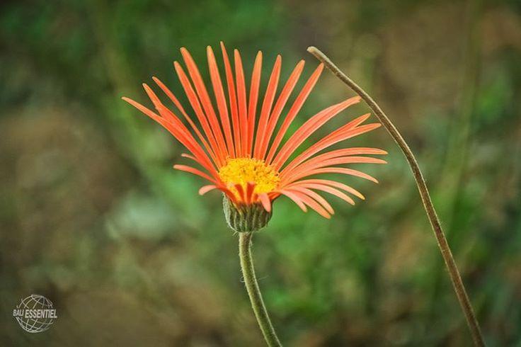 Fleur, photo floue derriere