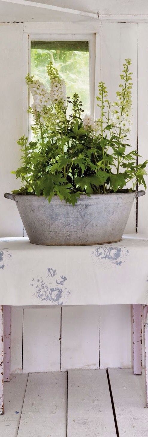 delphinium - Cabbages and Roses