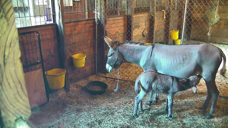 I'm watching The Donkey Hill Cam on streaming