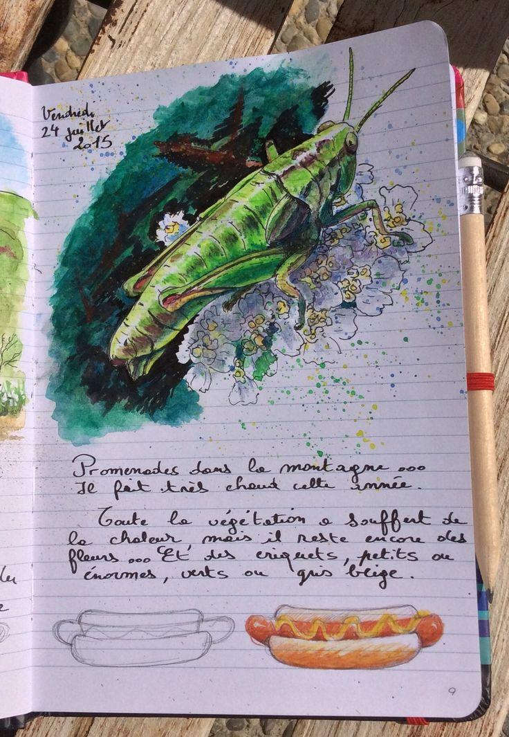 Criquet vert Malf2015 | Moleskine | Art sketchbook, Art ...