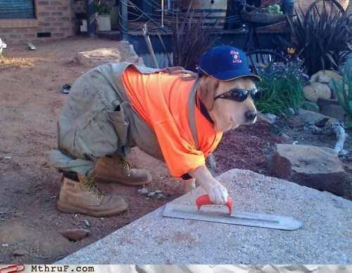 Last time I'll use an unlicensed contractor.: Work Hard, Idea, Funny Dogs, Funny Pictures, Dogs Costumes, Pet, Funny Stuff, Funny Animal, Work Dogs