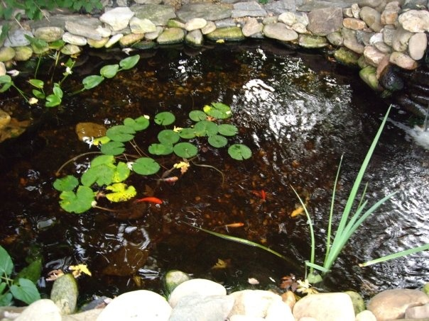 Small koi pond in the front of the house