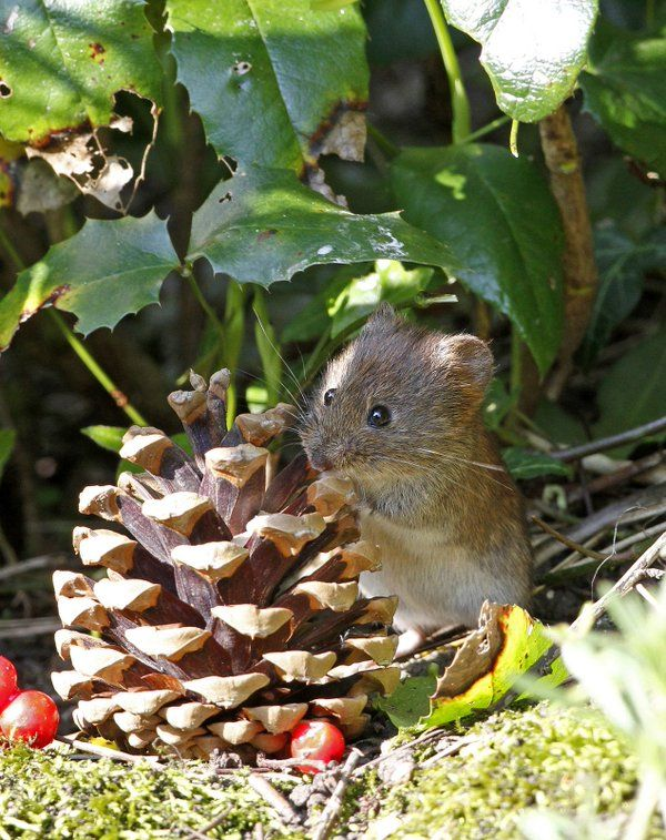 L'Assommoir Little Mouse  by Neil Walker