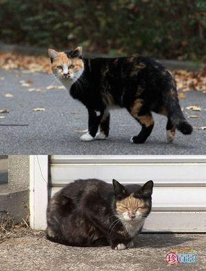 服を着たような : 猫の模様が可愛すぎる ぱっつん、ザビエル、刺青もん - NAVER まとめ