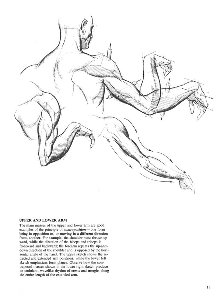 shoulders* ✤ || CHARACTER DESIGN REFERENCES | Find more at https://www.facebook.com/CharacterDesignReferences if you're looking for: #line #art #character #design #model #sheet #illustration #expressions #best #concept #animation #drawing #archive #library #reference #anatomy #traditional #draw #development #artist #pose #settei #gestures #how #to #tutorial #conceptart #modelsheet #cartoon @Rachel Oberst Design References