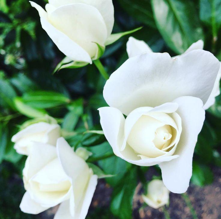 33 best Pflanzen in unserem Garten images on Pinterest | Garten ...