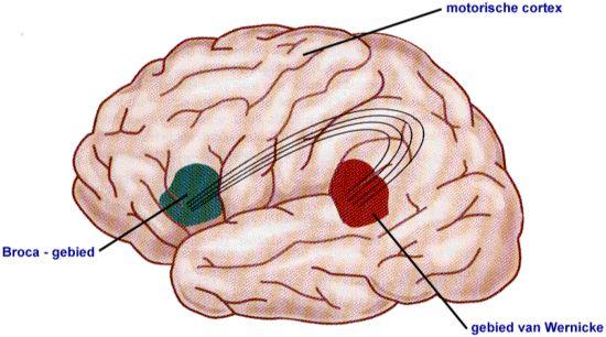 Mensen met dyslexie verwerken informatie in hun hersenen anders dan mensen zonder dyslexie. Dyslectische denken anders.