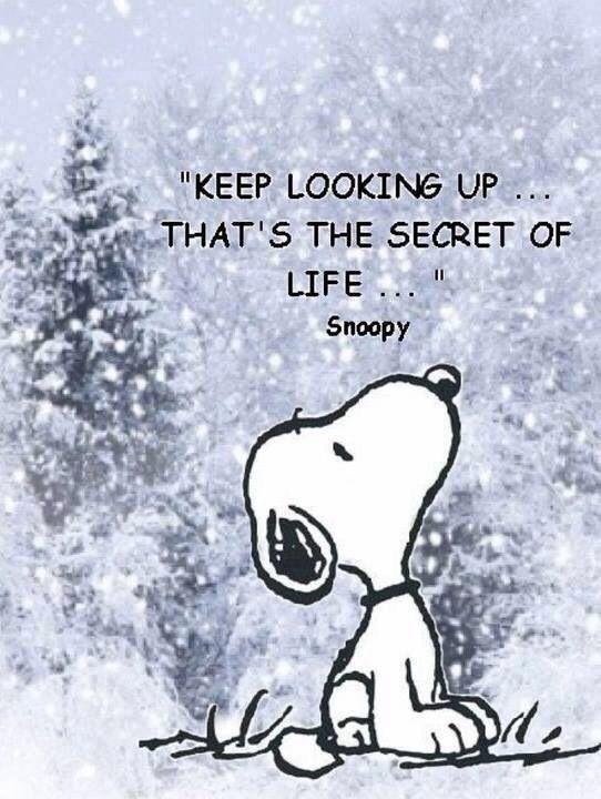 Always look up.