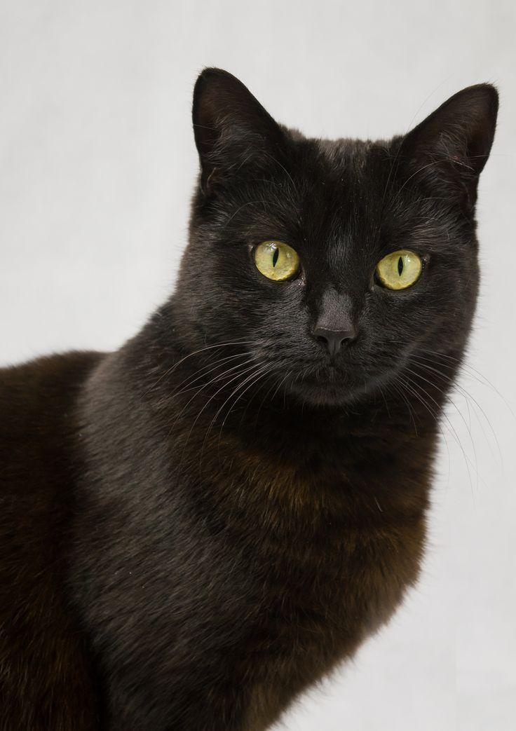 rose Black cat