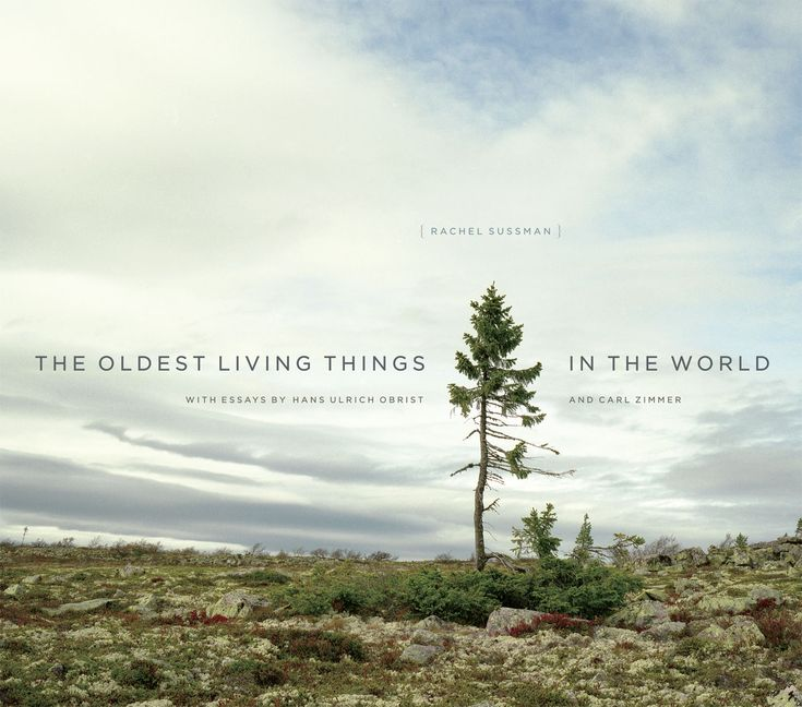 The Oldest Living Things in the World, Sussman, Zimmer, Obrist