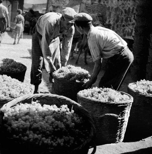 Καλάθια με σταφύλια. Θήρα, 1950-1955 Βούλα Θεοχάρη Παπαϊωάννου