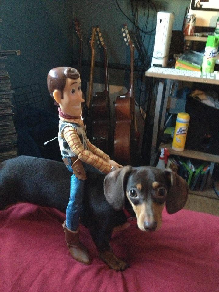 121 Best Dogs Of Disney Images On Pinterest Disney Magic