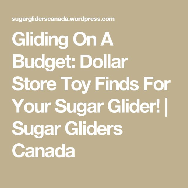 Gliding On A Budget: Dollar Store Toy Finds For Your Sugar Glider! | Sugar Gliders Canada