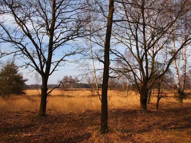 Bos in de Trabantse heide