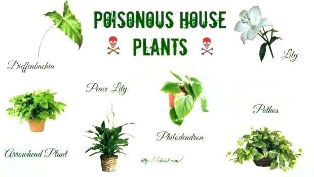 50 House Plants Safe For Cats Children Toxic Plants For Cats Plants Houseplants Safe For Cats