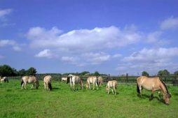 Mlodzikowo.pl - Gospodarstwo agroturystyczne, stadnina koni Fiord Galeria