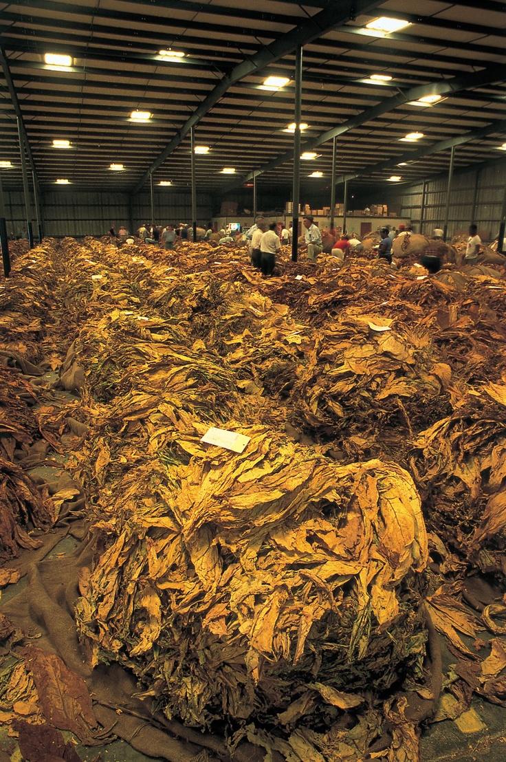 125 best tobacco tools images on pinterest north carolina cash