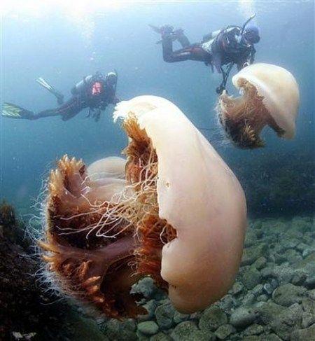 corais no oceano!