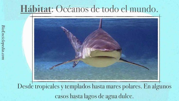 Caracteristicas del tiburón