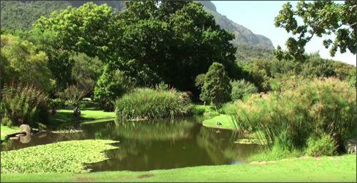 De Kirstenbosch National Botanical Garden. #zuidafrika