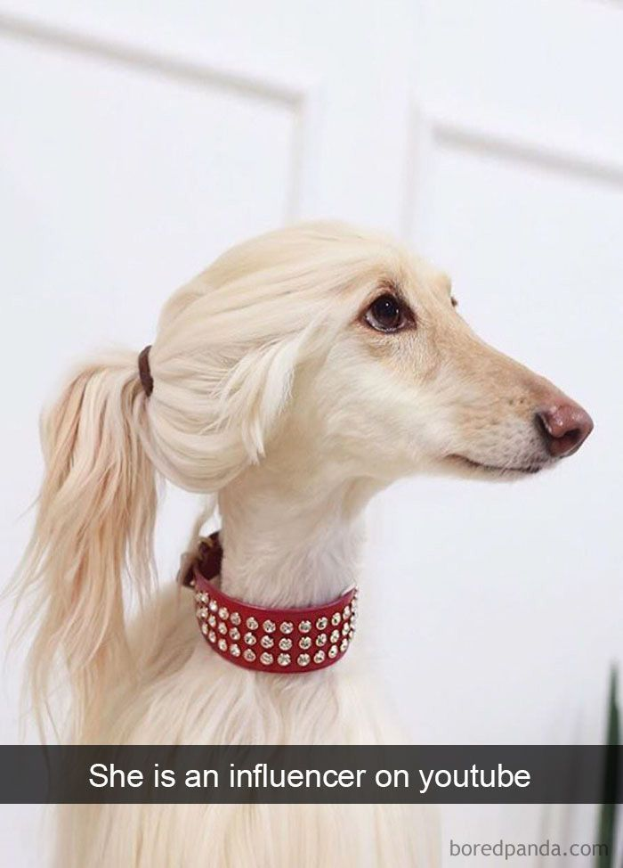 She Is An Influencer On Youtube Dog Snapchats Funny Animals