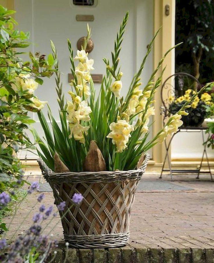 гладиолусы в вазонах фото третью фотографию просто