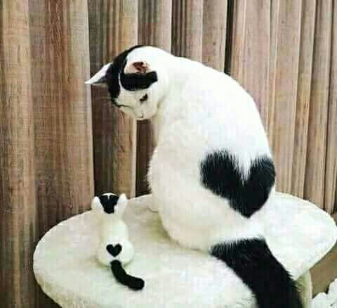 Amour de chats 🧡🧡🧡 chats calin –     Chats et chatons- chaton mignon -b…