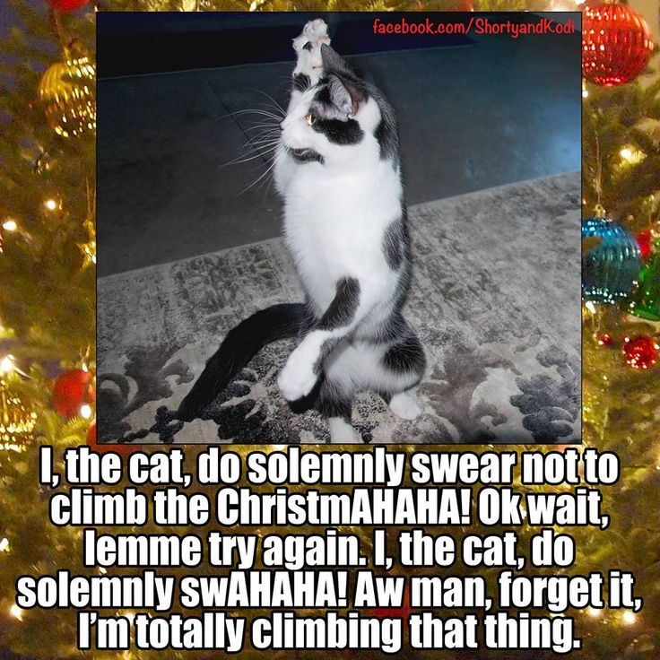 Keep Cat Away From Christmas Tree: I, The Cat, Do Solemnly Swear Not To Climb The