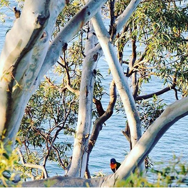 Nelson Bay at @portstephens by @miss_katiewright #colour #wildlife #mylegendarydrive #roadtrip #beautifulaustralia #nsw #portstephens #australia #australiantraveller #completelywanderlust #legendarynature