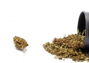 Want to Quit Smoking or Chewing Tobacco? Chew Hemp Instead!