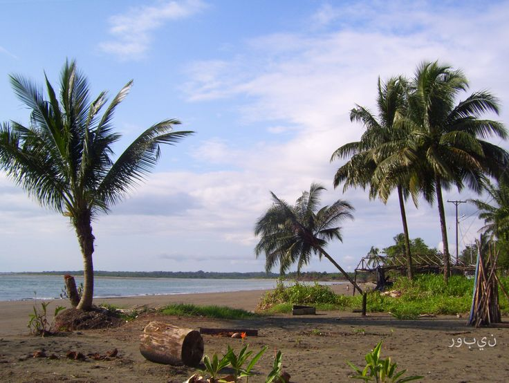 Las palmas de la Barra. Buenaventura.