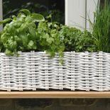 Home Allotment Window Box | The Balcony Gardener