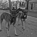 ¡Perros rabiosos!- Respondió Armando, secundó Jacobo, ignoró Rodrigo