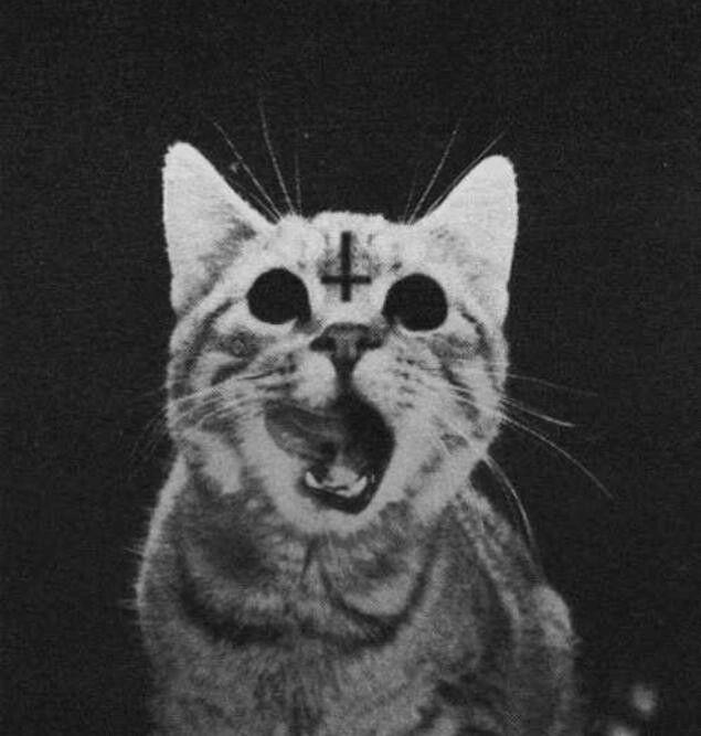 Satan Kitty
