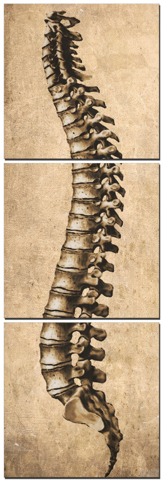 12 Spine Canvas Art by South5thStreetDesign on Etsy, $112.00