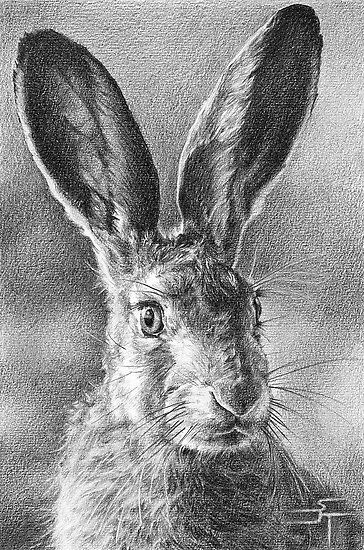 "Hare Today, Gone Tomorrow by Sami Thorpe  British Hare. Copied from an image taken by ""Our Wild Life""…  This sprightly character was drawn on medium surface cartridge paper using a mixture of 2b – 5b pencils. He took just over 25 hours from start to finish and is a particular favourite of mine.  http://www.redbubble.com/people/samithorpe/works/7597310-hare-today-gone-tomorrow#comment-52188705"